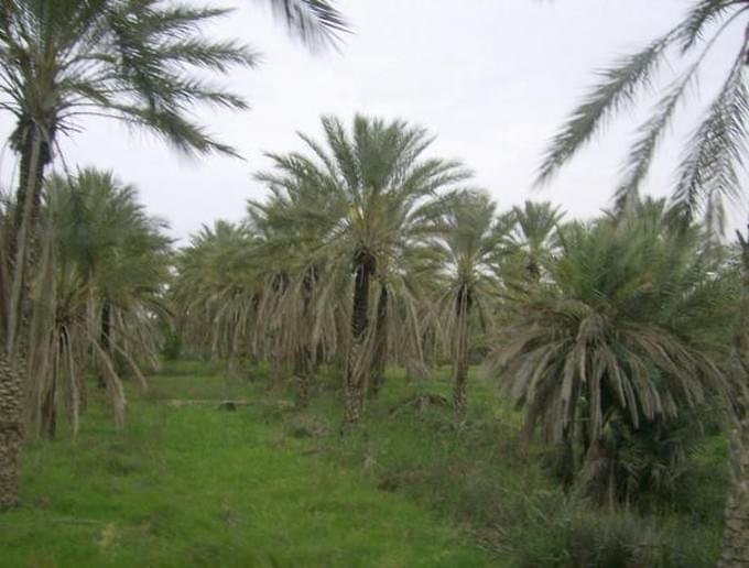 території деревья туниса фото углу здание новой