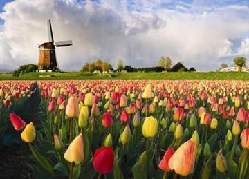 ,  Нидерланды