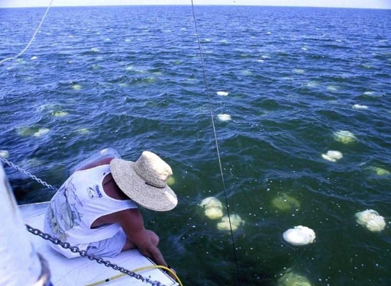 Безопасность на пляже: медузы атакуют берега Средиземного моря ...