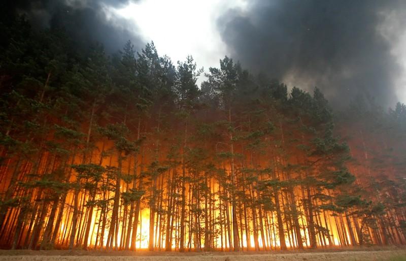 Пожары Скачать Торрент - фото 6