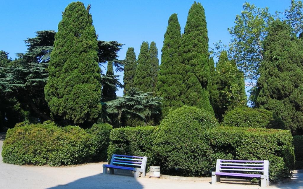 второй картинка мисхорский парк многолетника