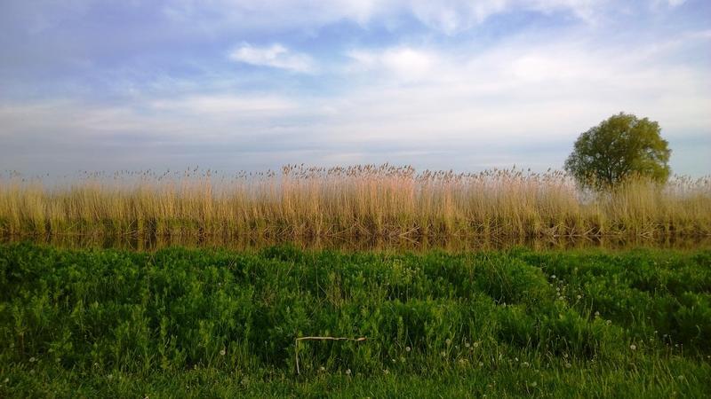 Погода в затоне воронежской обл воробьевского р на