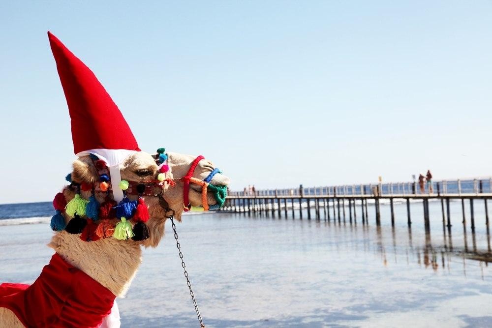 Спрос на отели Хургады, Шарм-эль-Шейха и Луксора на Рождество оказался неожиданно высоким