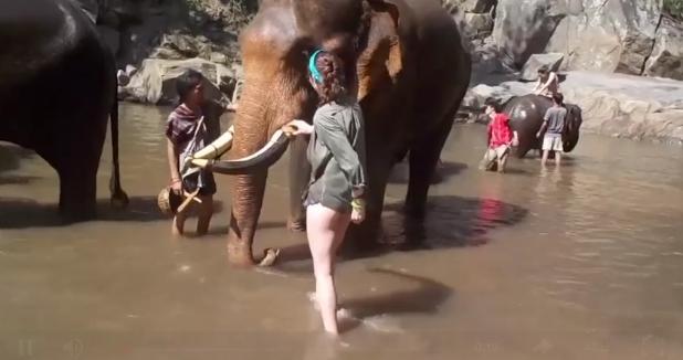 ВТаиланде жертвой слона стала туристка
