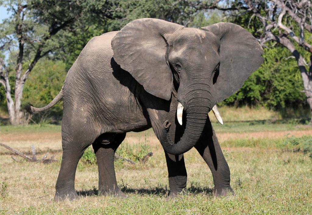 В Эфиопии слон убил туриста из Испании
