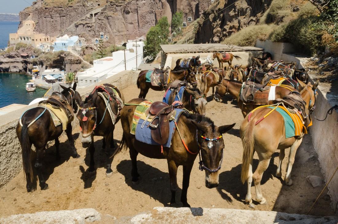 Туристам с лишним весом запретили кататься на ослах на Санторини , Греция