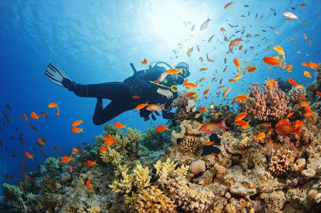 В Египте туристам запретят кормить рыб