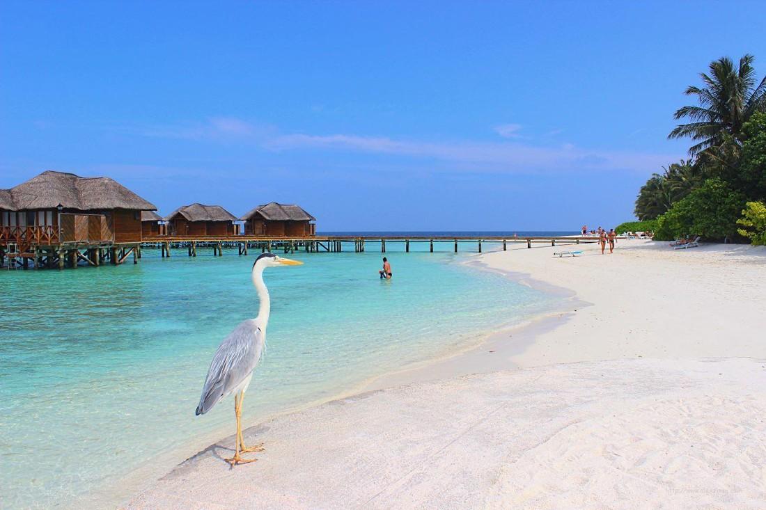 ГМИД договорился с Мальдивами о безвизовом режиме для туристов