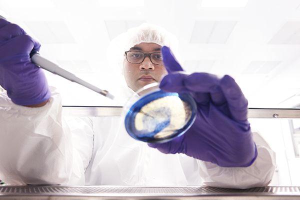 В Тоскане борются с супербактерией убийцей