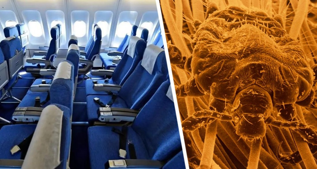 Туристов предупредили о риске заразиться вшами на самолете