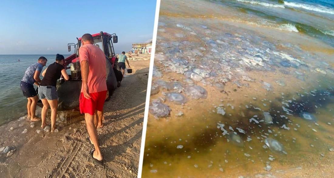 Медузы сорвали туристический сезон на популярном российском курорте